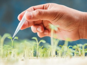 Agriculture and Biotechnology